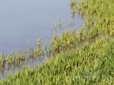 Аварии в Напоителни системи наводниха хиляди декари в Русенско