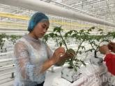 Колко голяма е най-голямата оранжерия в Китай?