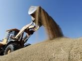 САРА: По-слаба реколта от пшеница, ечемик и рапица