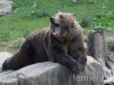 Вълците и мечките стават сериозна заплаха за фермите в Европа